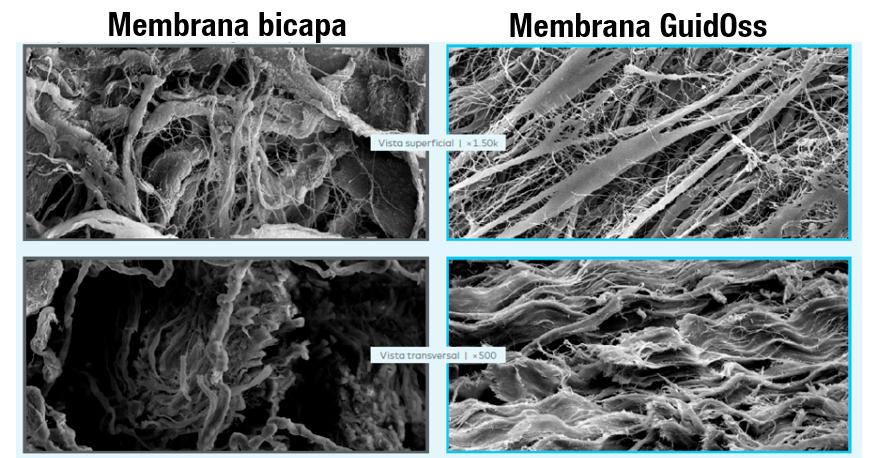 membrana-bicapa--guidoss1